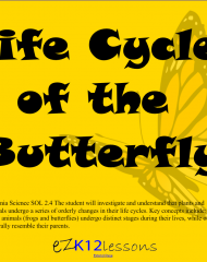 Life Cycle of the Butterfly | Smartboard Activity