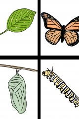 Life Cycle of the Butterfly: Hand-Drawn Clipart