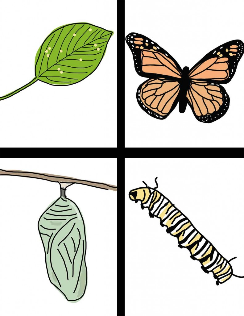 Life Cycle of the Butterfly: Hand-Drawn Clipart | ezk12lessons.com
